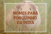 104 nomes para porquinho da índia