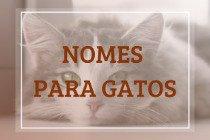505 nomes para gatos e gatas - clássicos e originais