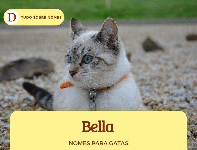 111 nomes para gatas: desde ideias fofas até as mais engraçadas