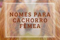 253 nomes para cachorro fêmea (cadela): criativos, chiques e fofos