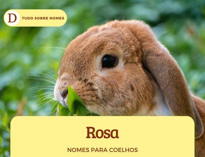 Nomes para coelhos de estimação: 103 opções para fêmeas e machos