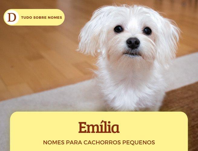 Nomes para cachorros pequenos: 150 sugestões para machos e fêmeas