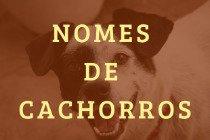 Nomes para o seu cachorro: 40 opções fofas e divertidas!