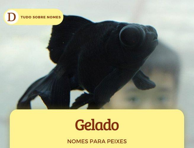 100 nomes lindos para peixes de estimação