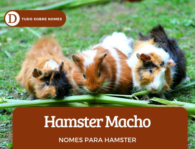 Nomes para hamster: 110 opções para o seu bichinho