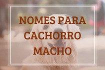 288 nomes para cachorro macho