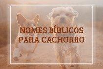 23 nomes bíblicos para cachorro