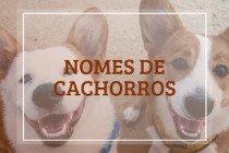 Nomes de cachorros: 402 ideias para machos e fêmeas