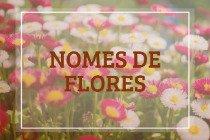 34 nomes de flores com os seus significados