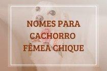 208 nomes para cachorro fêmea chique