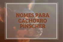 Nomes para cachorro pinscher: 205 ideias para macho e fêmea