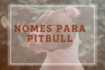46 nomes para cachorros pitbull: sugestões para diferentes personalidades de macho e fêmea!