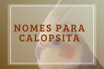 100 nomes para calopsita: engraçados, em inglês e inspirados em pássaros famosos