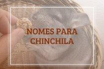 118 nomes para chinchila