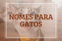 201 nomes incríveis para gatos