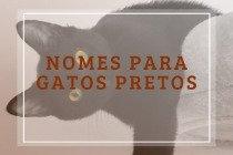 Nomes para gatos pretos: 120 ideias para combinar com seu gatinho