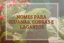 104 nomes para iguanas, cobras e lagartos