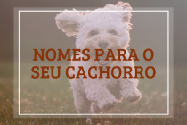 Nomes para o seu cachorro: 92 opções fofas e divertidas