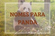 260 nomes para panda