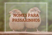 156 nomes para passarinhos