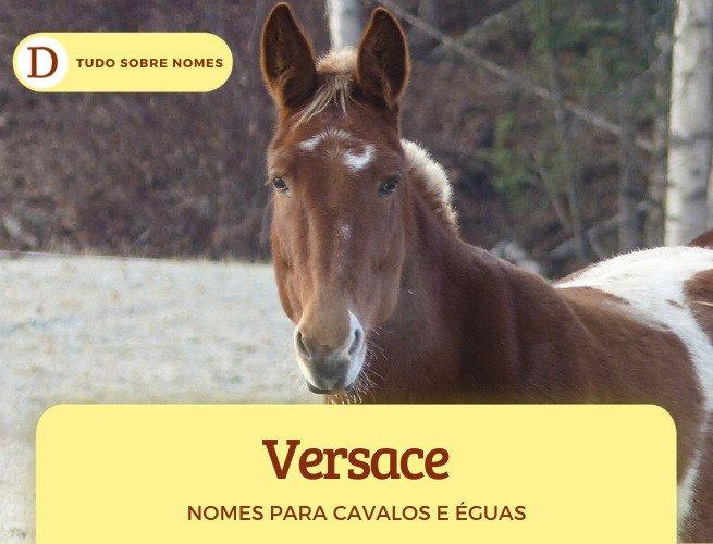 Nomes para cavalos e éguas: 234 ideias famosas, bonitas, em inglês, vitoriosas e engraçadas